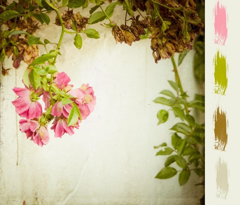 web_roses_moodboard