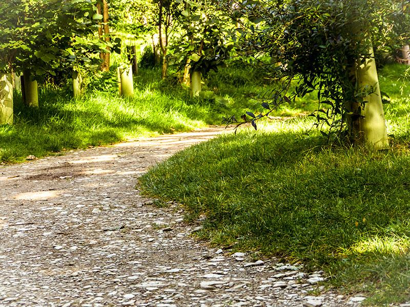 woodland-walk-hestercombe