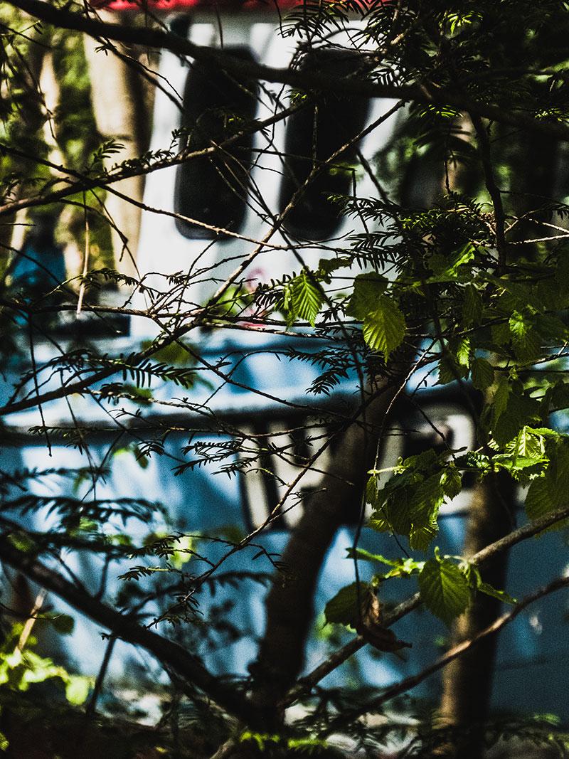 P1030336_thrtrees