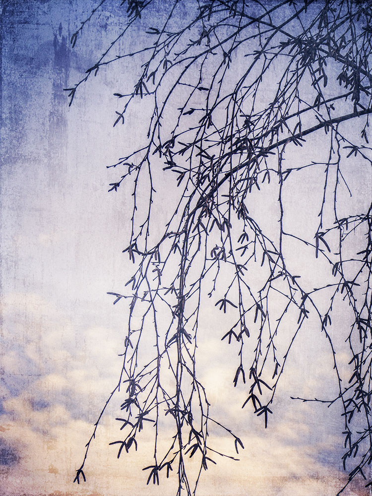 birchbranches