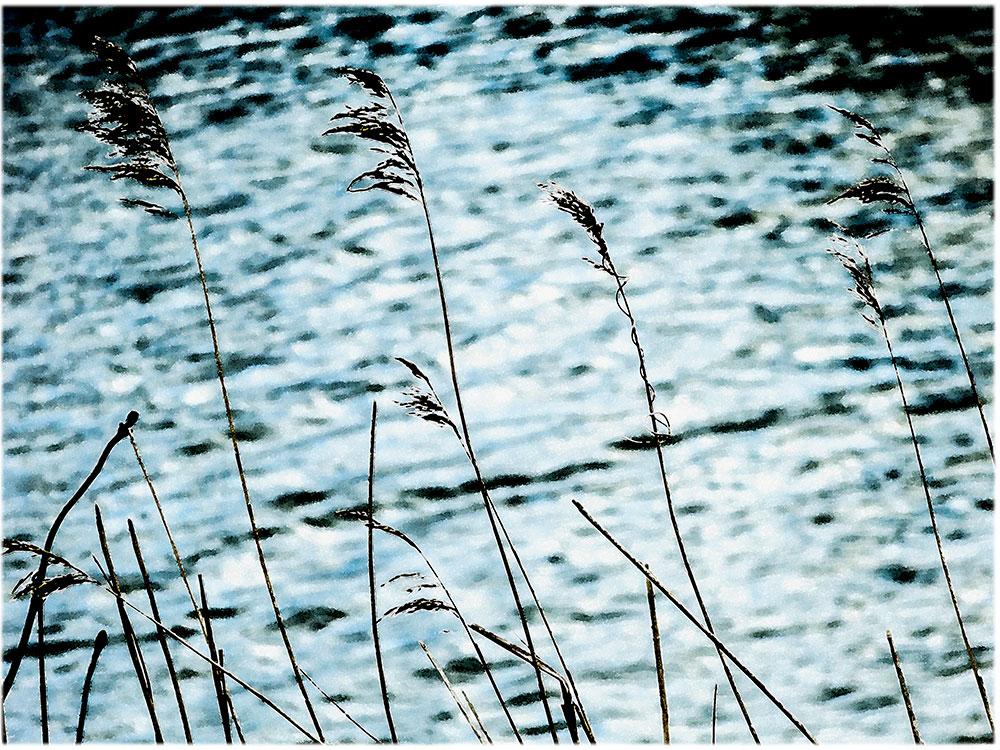 grasses-watercolour