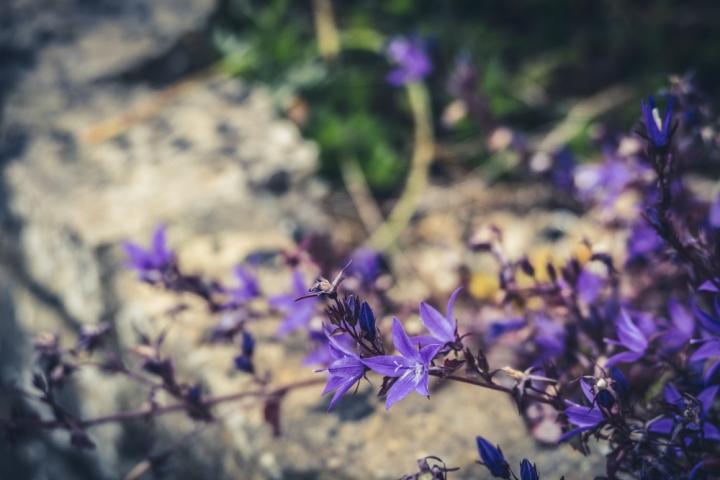 -20160613-P1040773in my garden