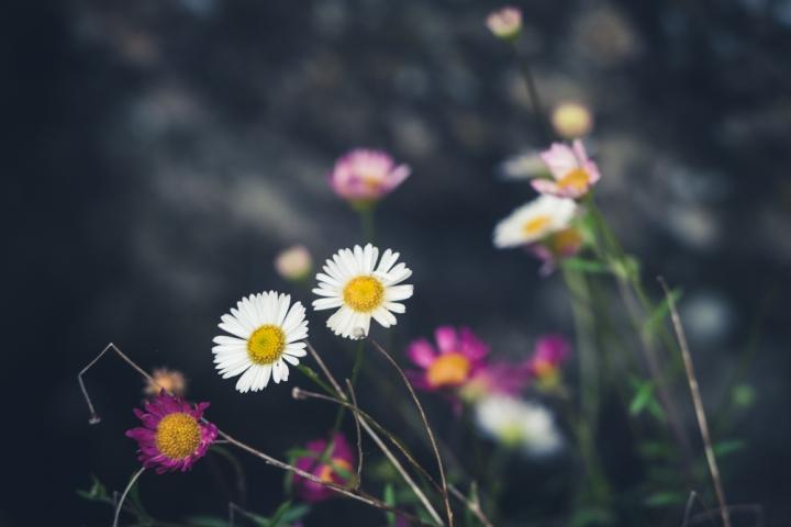 -20160613-P1040818in my garden