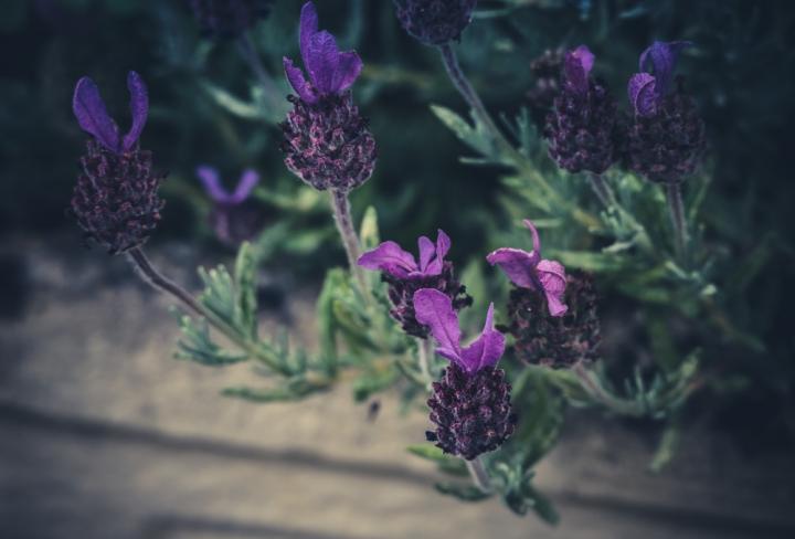 -20160613-P1040819in my garden