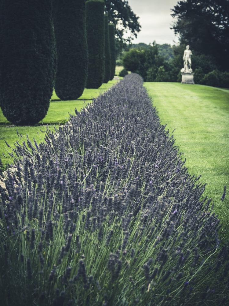 1060107-lavender