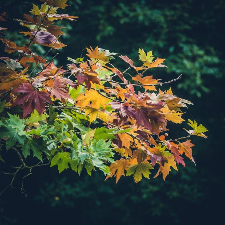 20160912-p1060115autumn-leaves-mottisfont