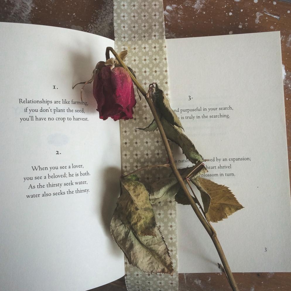 3740-rose-and-rumi